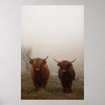 Highland Cattle Fog Photo Poster