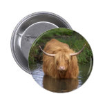 Highland Cattle Pin