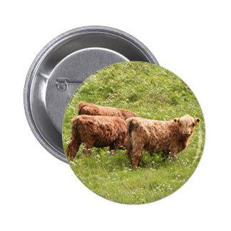 Highland cattle, Scotland 2 Inch Round Button