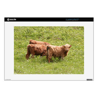 Highland cattle, Scotland Decals For Laptops