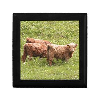 Highland cattle, Scotland Gift Box