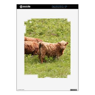 Highland cattle, Scotland iPad 2 Skin
