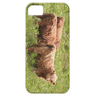 Highland cattle, Scotland iPhone SE/5/5s Case