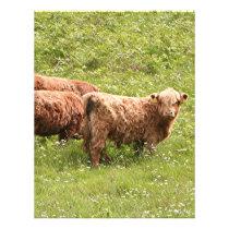 Highland cattle, Scotland Letterhead