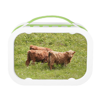 Highland cattle, Scotland Lunch Box