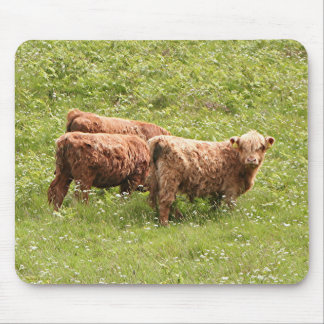 Highland cattle, Scotland Mouse Pad