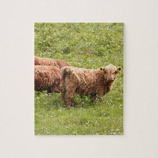 Highland cattle, Scotland Puzzle