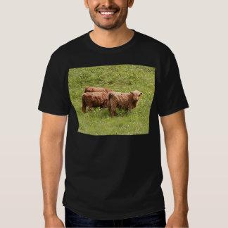 Highland cattle, Scotland Shirt