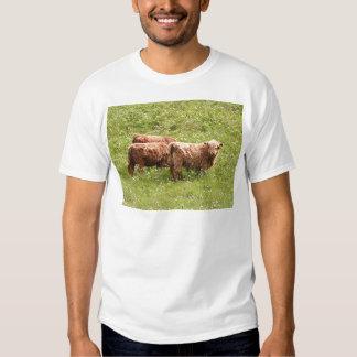 Highland cattle, Scotland T Shirt