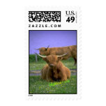 Highland-Cattle stamp
