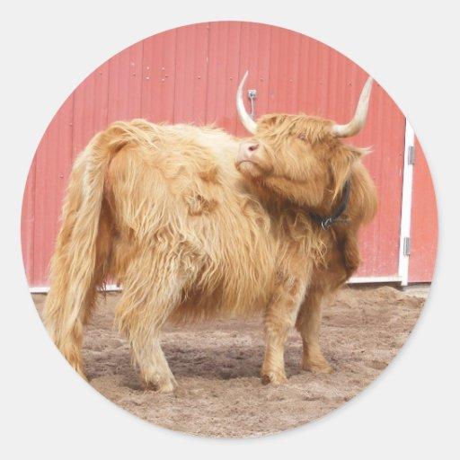 Highland Cattle Sticker