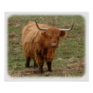 Highland Cow 9Y316D-053 Poster