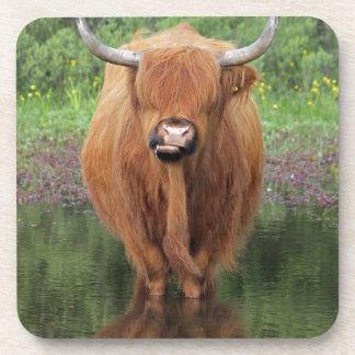 Highland cow beverage coaster