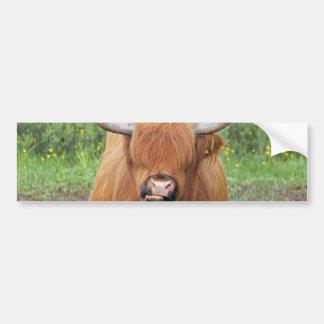 Highland cow bumper sticker