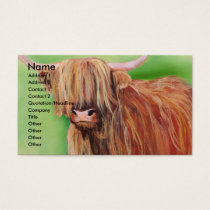 Highland cow business card