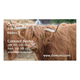Highland Cow Business Card Template