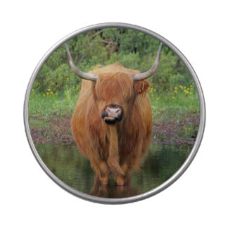 Highland cow candy tin