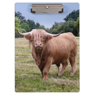 Highland Cow Clipboard