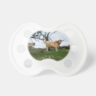 Highland_Cow_Country,_ Pacifier