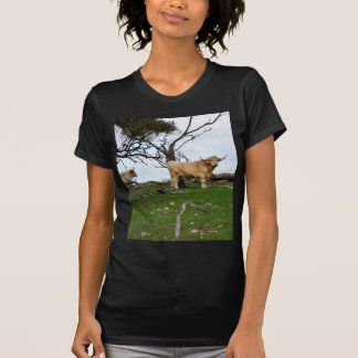 Highland_Cow_Country,_ T-Shirt