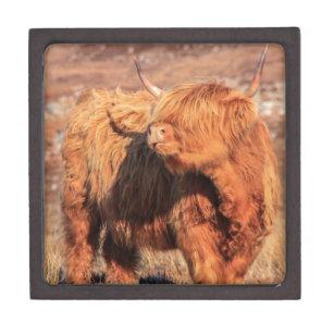 Highland Cow Gift Box