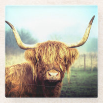 Highland Cow Glass Coaster