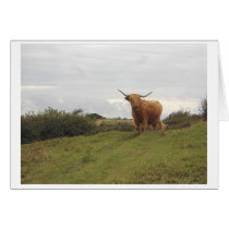 Highland Cow - Greeting Card