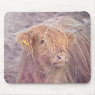 Highland Cow, Highland Cattle Mouse Pad