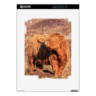 Highland Cow iPad 2 (Wi-Fi/Wi-Fi + 3G) Skin Skins For The iPad 2