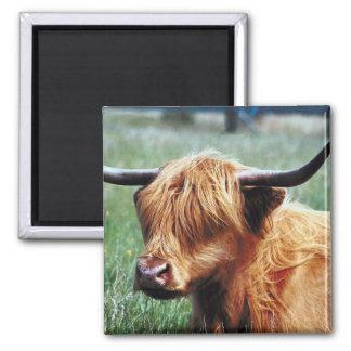 Highland Cow Magnet