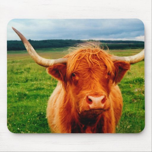 Highland Cow Mouse Pad
