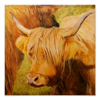 Highland Cow, Oil pastels Poster