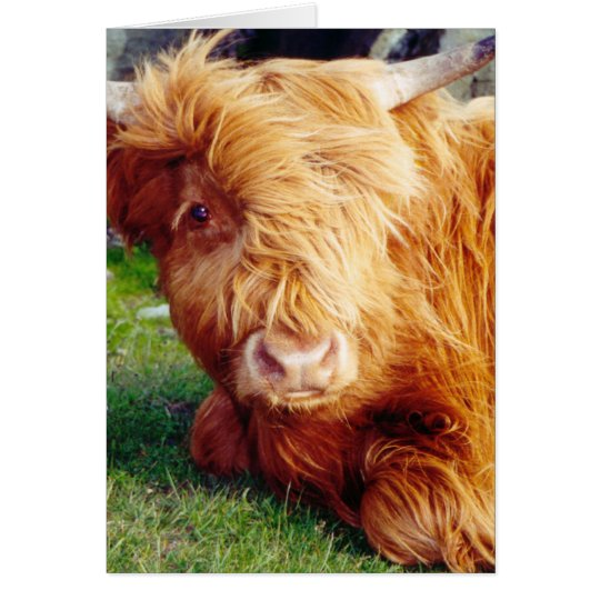 Highland Cow Photo Card