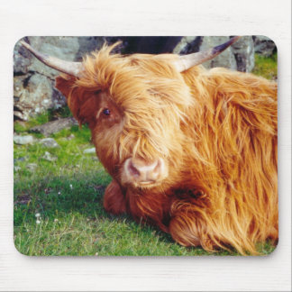 Highland Cow Photo Mouse Pad