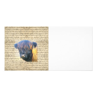 Highland cow picture card