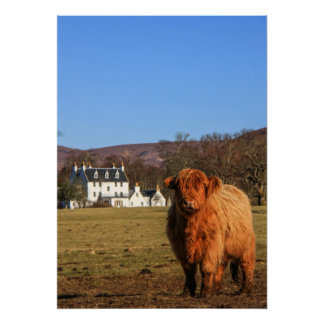 Highland Cow Poster/Print