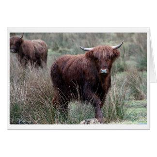 Highland Cow Scottish Saltire Card