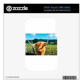 Highland cow skin for iPod touch 4G