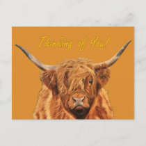 Highland Cow - Thinking of You Postcard