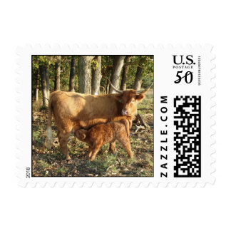Highland Cow with Calf Postage