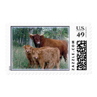 Highland Cow with Calves Postage Stamps