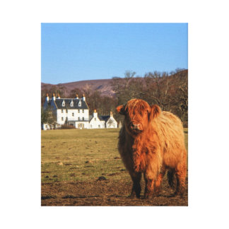 Highland Cow Wrapped Canvas Stretched Canvas Print