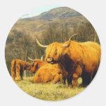 Highland Cows Round Stickers