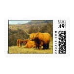 Highland Cows Stamps