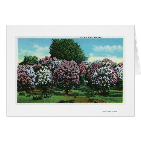 Highland Park Lilacs in Bloom Card