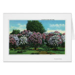 Highland Park Lilacs in Bloom Greeting Card