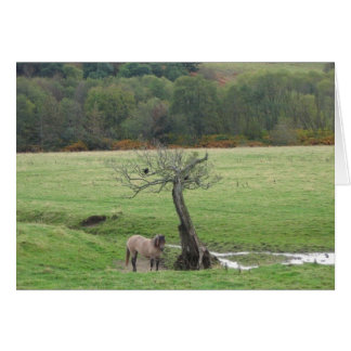 Highland pony and raven greeting card