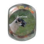Highland Sheep Glass Candy Jars