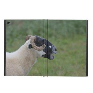 Highland Sheep iPad Air Cover