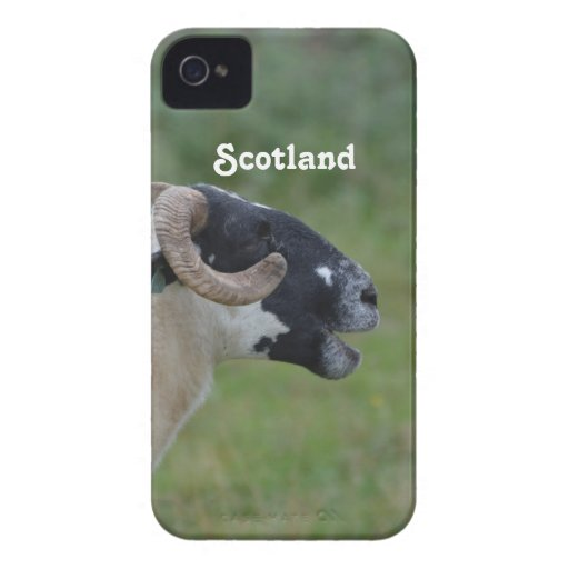 Highland Sheep iPhone 4 Cases